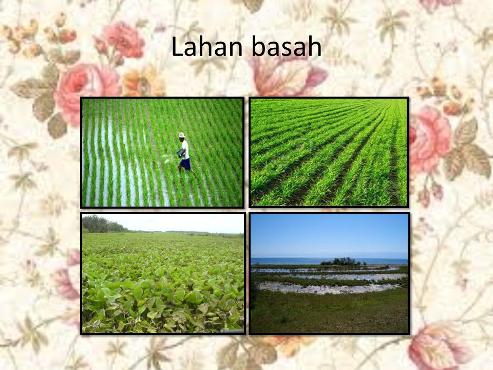 B.Pertanian Lahan Kering Pertanian lahan adalah bentuk pertanian yang mengandalkan air hujan.