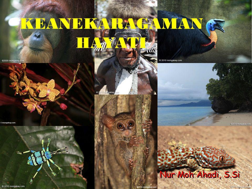 GOLONGAN HEWAN Berikut ini adalah keanekaragaman hayati golongan hewan yang terdapat di Indonesia.