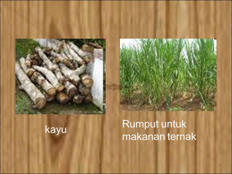 NILAI MANFAAT KONSUMTIF Nilai manfaat konsumtif artinya nilai produk keanekaragaman hayati yang langsung dikonsumsi melalui pasar, seperti kayu bakar,