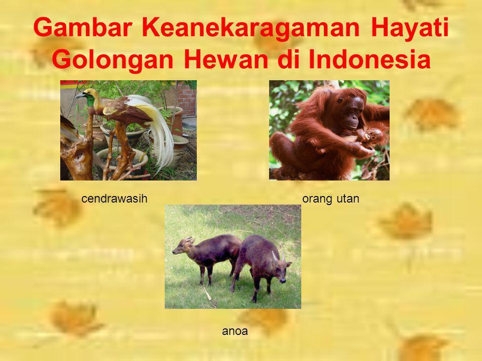 GOLONGAN HEWAN Berikut ini adalah keanekaragaman hayati golongan hewan yang terdapat di Indonesia. Komodo, merupakan jenis reptilia raksasa yang mengh