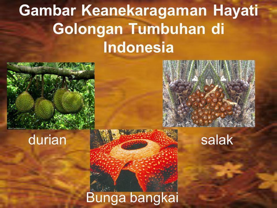 GOLONGAN TUMBUHAN Berikut ini adalah keanekaragaman hayati golongan tumbuhan yang terdapat di Indonesia. Durian, merupakan buah yang semula ditemukan