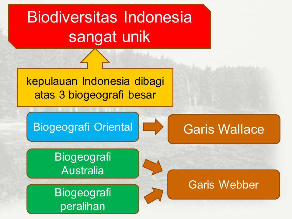 Gambar Keanekaragaman Hayati Golongan Tumbuhan di Indonesia duriansalak Bunga bangkai