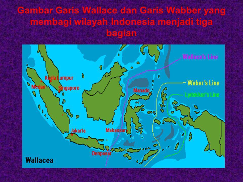 Biodiversitas Indonesia sangat unik kepulauan Indonesia dibagi atas 3 biogeografi besar Biogeografi Oriental Biogeografi Australia Biogeografi peralih