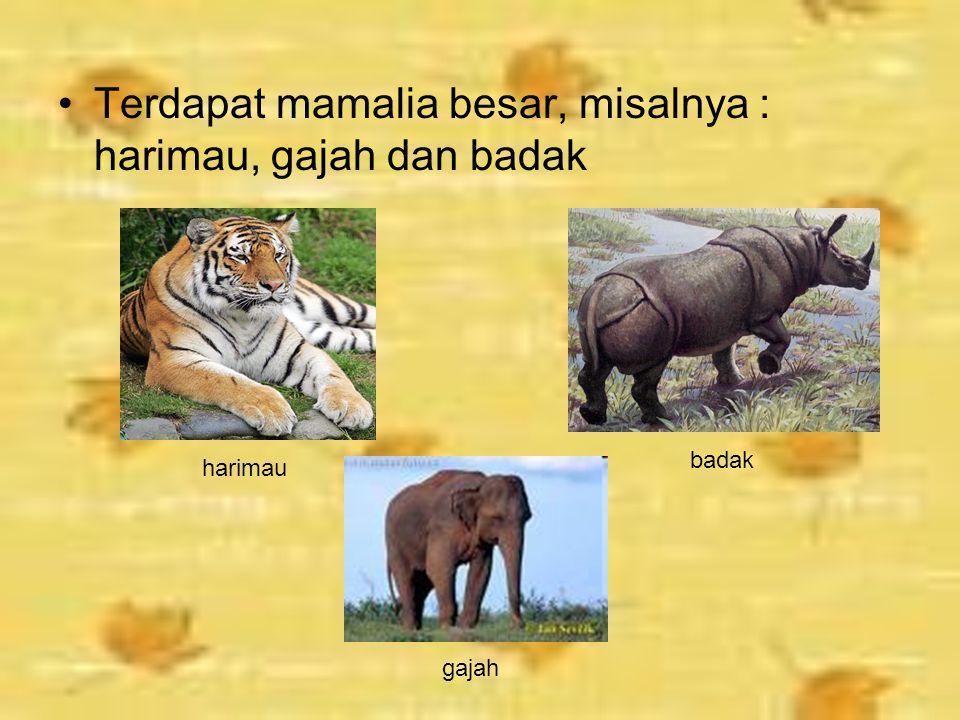 Jenis – Jenis Hewan Wilayah Oriental Hewan yang daerah persebarannya di wilayah Indonesia bagian barat memiliki ciri sebagai berikut. Berbagai macam p
