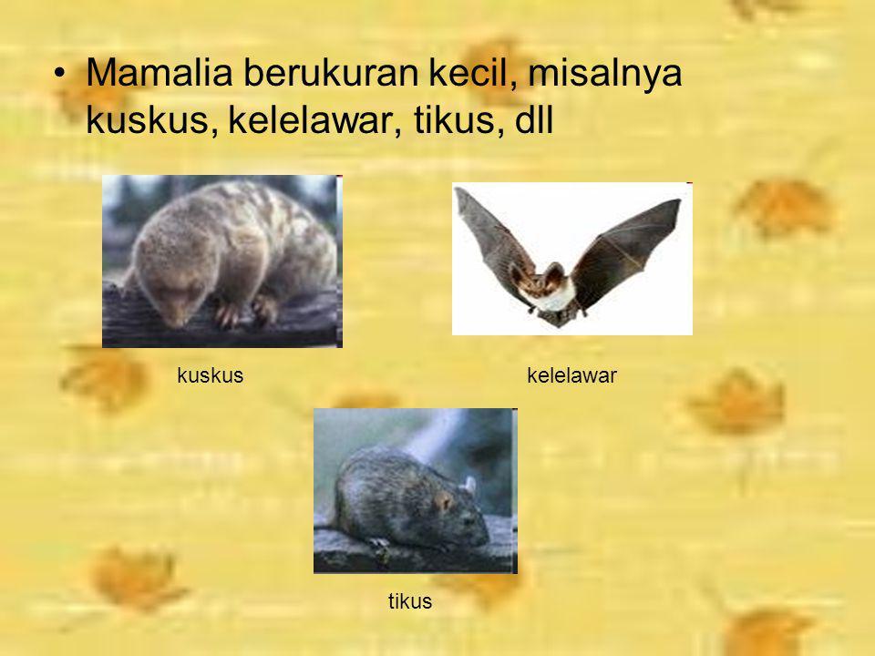 Jenis – Jenis Hewan Wilayah Australia Hewan yang daerah persebarannya di wilayah Indonesia bagian timur (wilayah Australia) memiliki ciri-ciri sebagai
