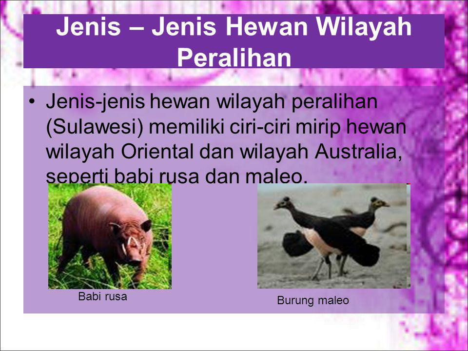 Burung yang berwarna warni atau memiliki bulu yang indah, yaitu cendrawasih. cendrawasih