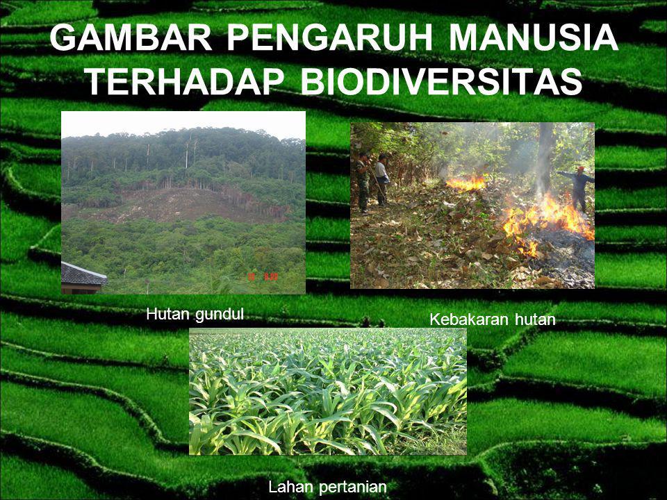 Usaha peningkatan produksi pertanian yang secara tidak sadar menurunkan keanekaragaman hayati yang terus dikembangkan yaitu dengan cara bercocok tanam