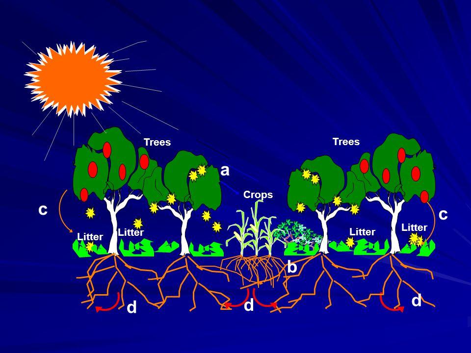Manfaat sosial dari agroforestry timbul dari peningkatan produksi per satuan luas dan tercapainya kelestarian produksi tersebut.
