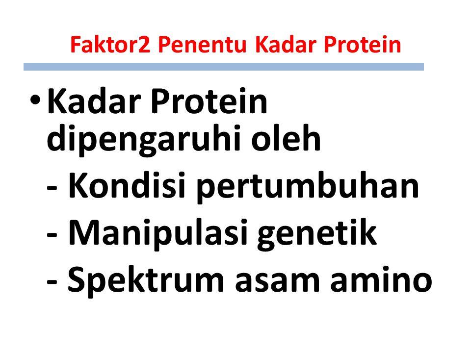 Faktor2 Penentu Kadar Protein Kadar Protein dipengaruhi oleh - Kondisi pertumbuhan - Manipulasi genetik - Spektrum asam amino