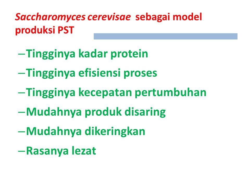 Saccharomyces cerevisae sebagai model produksi PST – Tingginya kadar protein – Tingginya efisiensi proses – Tingginya kecepatan pertumbuhan – Mudahnya produk disaring – Mudahnya dikeringkan – Rasanya lezat