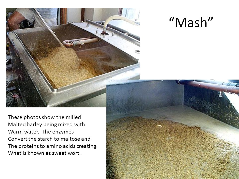 """Mash"" These photos show the milled Malted barley being mixed with Warm water. The enzymes Convert the starch to maltose and The proteins to amino aci"
