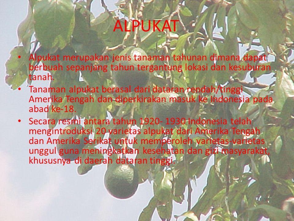ALPUKAT Alpukat merupakan jenis tanaman tahunan dimana dapat berbuah sepanjang tahun tergantung lokasi dan kesuburan tanah. Tanaman alpukat berasal da