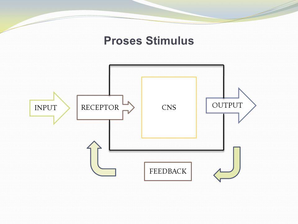 Proses Stimulus INPUT RECEPTOR CNS OUTPUT FEEDBACK