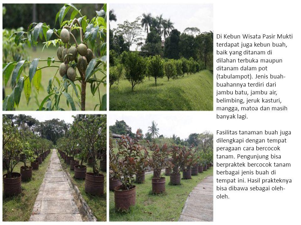 Di Kebun Wisata Pasir Mukti terdapat juga kebun buah, baik yang ditanam di dilahan terbuka maupun ditanam dalam pot (tabulampot). Jenis buah- buahanny