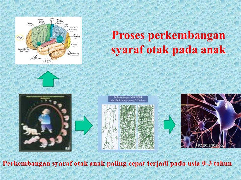 Proses perkembangan syaraf otak pada anak Perkembangan syaraf otak anak paling cepat terjadi pada usia 0-3 tahun