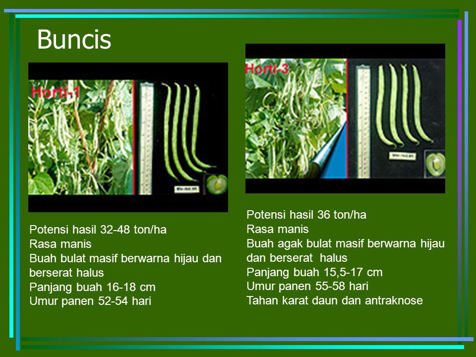 Buncis Potensi hasil 32-48 ton/ha Rasa manis Buah bulat masif berwarna hijau dan berserat halus Panjang buah 16-18 cm Umur panen 52-54 hari Potensi ha