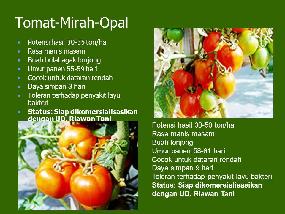 Tomat-Mirah-Opal Potensi hasil 30-35 ton/ha Rasa manis masam Buah bulat agak lonjong Umur panen 55-59 hari Cocok untuk dataran rendah Daya simpan 8 hari Toleran terhadap penyakit layu bakteri Status: Siap dikomersialisasikan dengan UD.