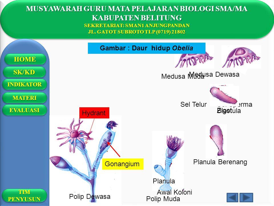 MUSYAWARAH GURU MATA PELAJARAN BIOLOGI SMA/MA KABUPATEN BELITUNG SEKRETARIAT: SMAN1 ANJUNGPANDAN JL. GATOT SUBROTO TLP (0719) 21802 MUSYAWARAH GURU MA