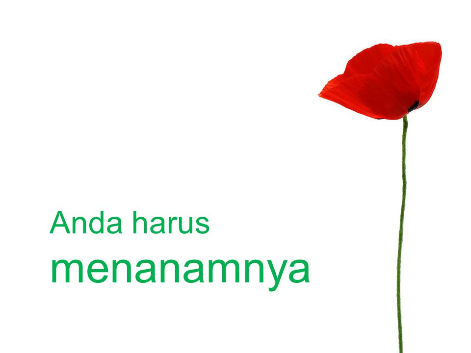 Adapted from: 'Apakah Anda Memiliki Kebun Ide?' by Muhammad Noer Photo Credit: Slide 6: 'Crows - Towards The Sun I Fly, Not As Icarus.' by Hash Milhan Under Creative Commons License PowerPoint design by Herry Mardian and Muhammad Noer Presentasi.net