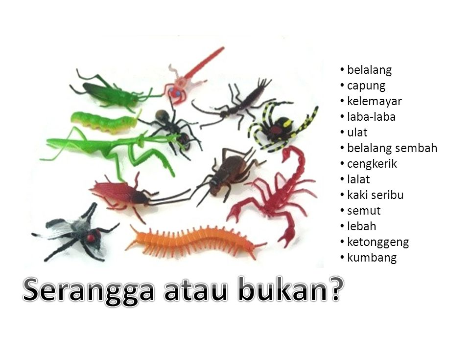 belalang capung kelemayar laba-laba ulat belalang sembah cengkerik lalat kaki seribu semut lebah ketonggeng kumbang
