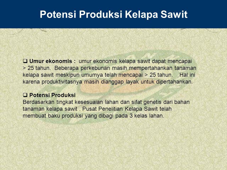 Potensi Produksi Kelapa Sawit  Umur ekonomis : umur ekonomis kelapa sawit dapat mencapai > 25 tahun. Beberapa perkebunan masih mempertahankan tanaman