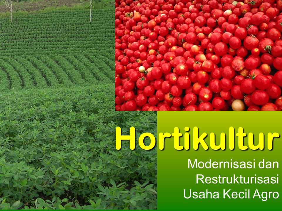 Kawi Boedisetio telebiro.bandung0@clubmember.org Modernisasi dan Restrukturisasi Usaha Kecil Agro Hortikultur