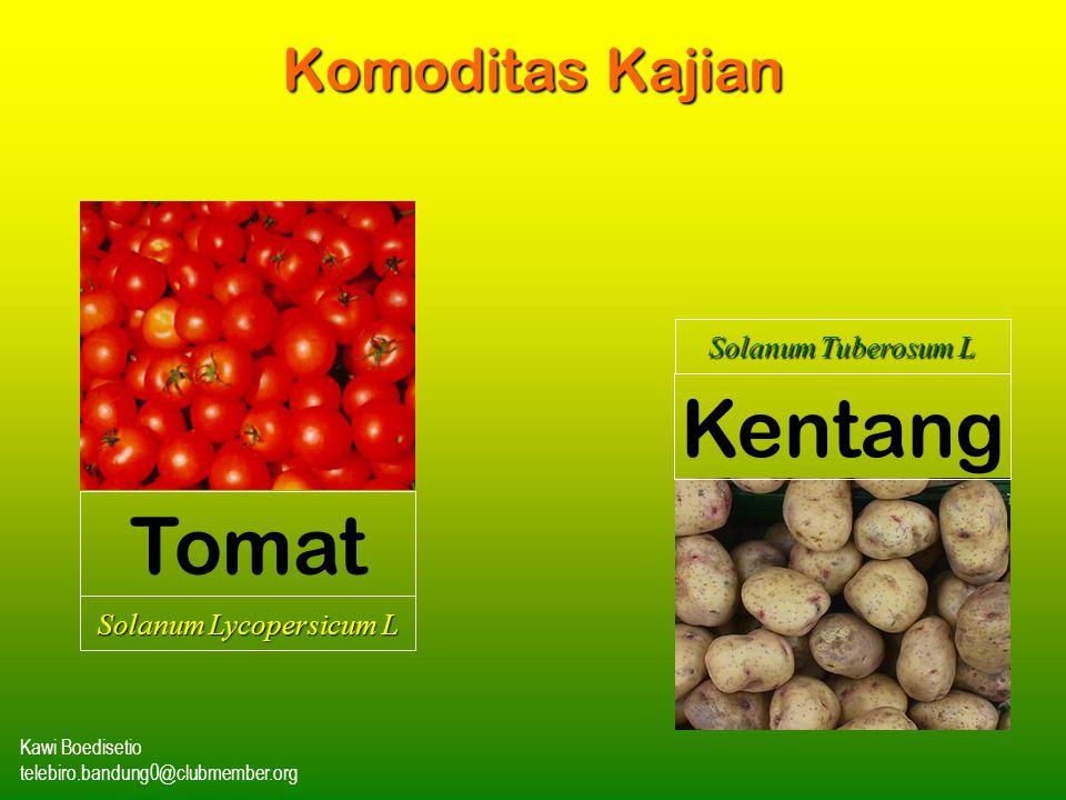 Kawi Boedisetio telebiro.bandung0@clubmember.org Komoditas Kajian Tomat Kentang Solanum Tuberosum L Solanum Lycopersicum L