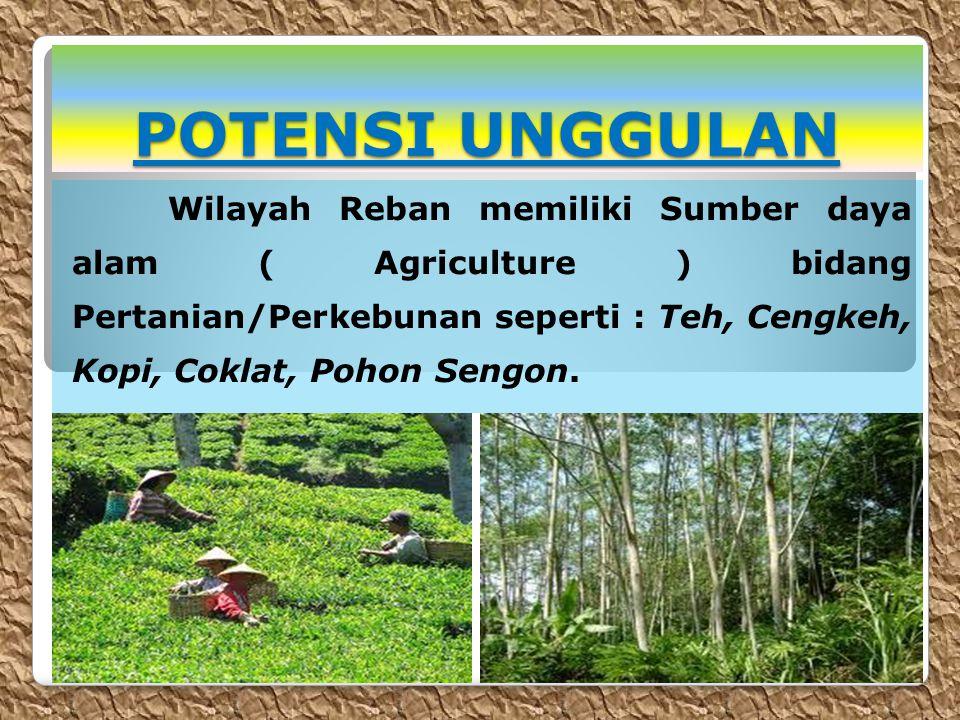 POTENSI UNGGULAN Wilayah Reban memiliki Sumber daya alam ( Agriculture ) bidang Pertanian/Perkebunan seperti : Teh, Cengkeh, Kopi, Coklat, Pohon Sengon.