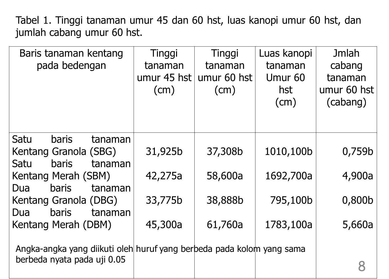 Baris tanaman kentang pada bedengan Jumlah umbi per tanaman Umur 90 hst (umbi) Hasil per tanaman umur 90 hst (gr) Satu baris tanaman Kentang Granola (SBG) Satu baris tanaman Kentang Merah (SBM) Dua baris tanaman Kentang Granola (DBG) Dua baris tanaman Kentang Merah (DBM) 11,128 5,323 10,933 5,553 287,18 202,88 256,95 179,18 Tabel 2.