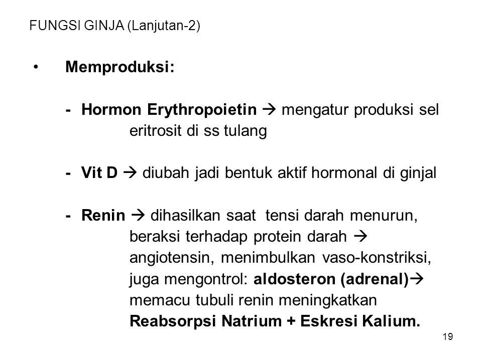 19 FUNGSI GINJA (Lanjutan-2) Memproduksi: -Hormon Erythropoietin  mengatur produksi sel eritrosit di ss tulang -Vit D  diubah jadi bentuk aktif horm