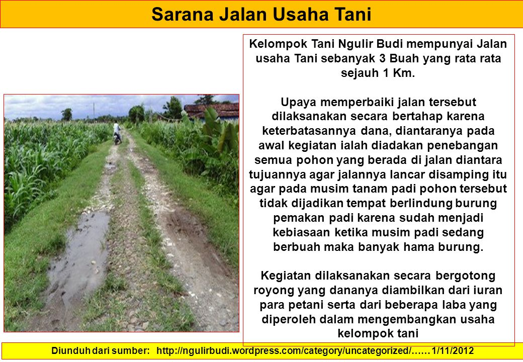 Sarana Jalan Usaha Tani Diunduh dari sumber: http://ngulirbudi.wordpress.com/category/uncategorized/…… 1/11/2012 Kelompok Tani Ngulir Budi mempunyai Jalan usaha Tani sebanyak 3 Buah yang rata rata sejauh 1 Km.