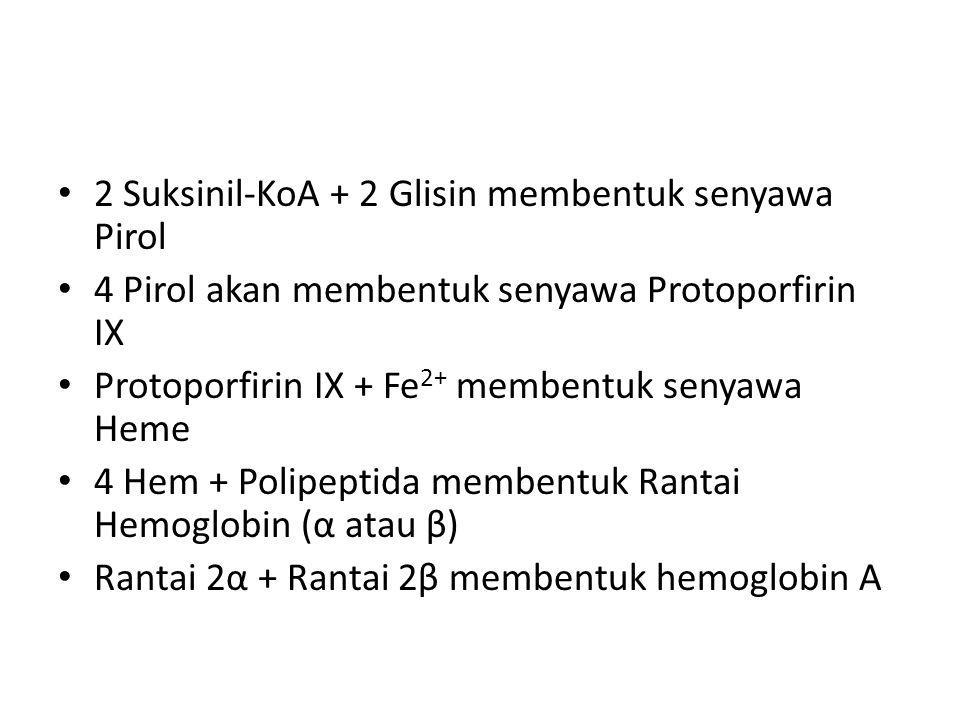 2 Suksinil-KoA + 2 Glisin membentuk senyawa Pirol 4 Pirol akan membentuk senyawa Protoporfirin IX Protoporfirin IX + Fe 2+ membentuk senyawa Heme 4 He