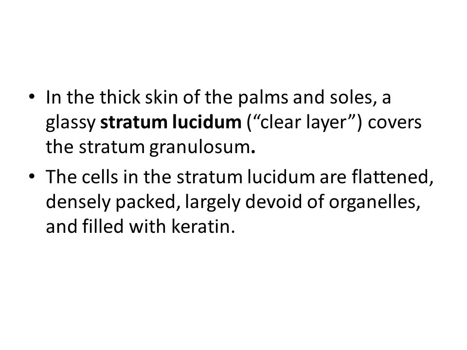 "In the thick skin of the palms and soles, a glassy stratum lucidum (""clear layer"") covers the stratum granulosum. The cells in the stratum lucidum are"