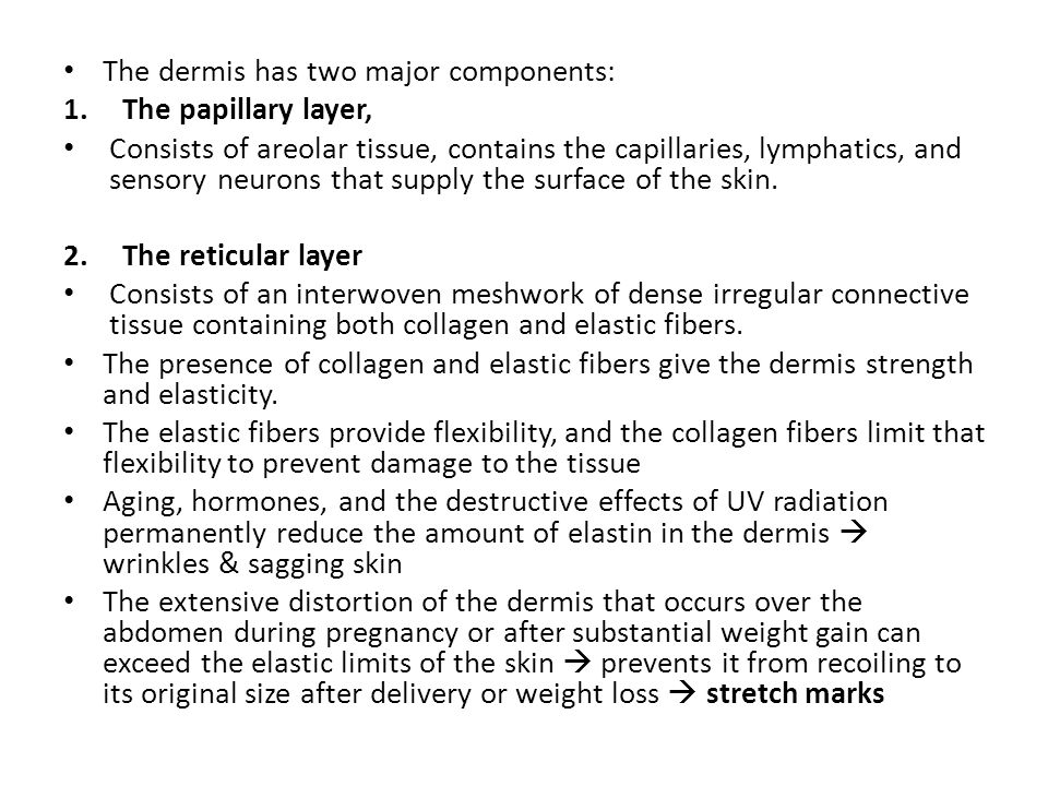 The dermis has two major components: 1.The papillary layer, Consists of areolar tissue, contains the capillaries, lymphatics, and sensory neurons that