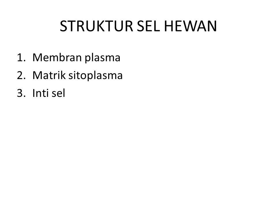 STRUKTUR SEL HEWAN 1.Membran plasma 2.Matrik sitoplasma 3.Inti sel
