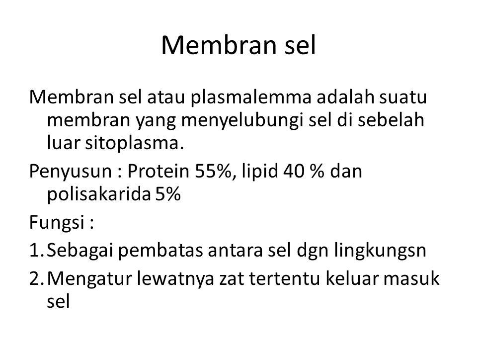 Membran sel Membran sel atau plasmalemma adalah suatu membran yang menyelubungi sel di sebelah luar sitoplasma.