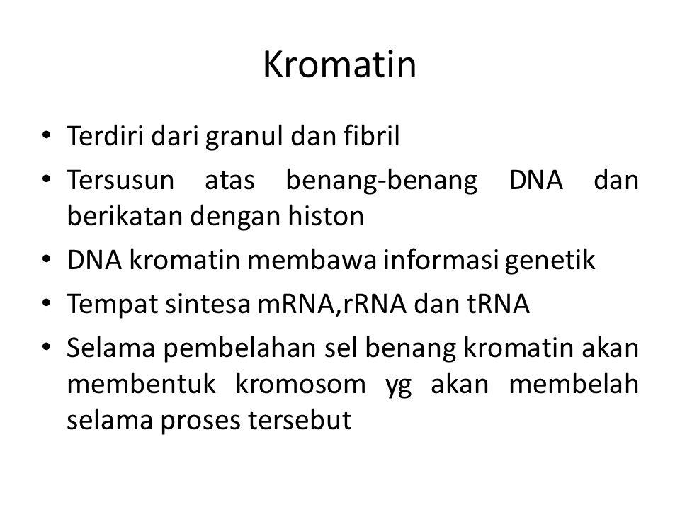 Kromatin Terdiri dari granul dan fibril Tersusun atas benang-benang DNA dan berikatan dengan histon DNA kromatin membawa informasi genetik Tempat sintesa mRNA,rRNA dan tRNA Selama pembelahan sel benang kromatin akan membentuk kromosom yg akan membelah selama proses tersebut