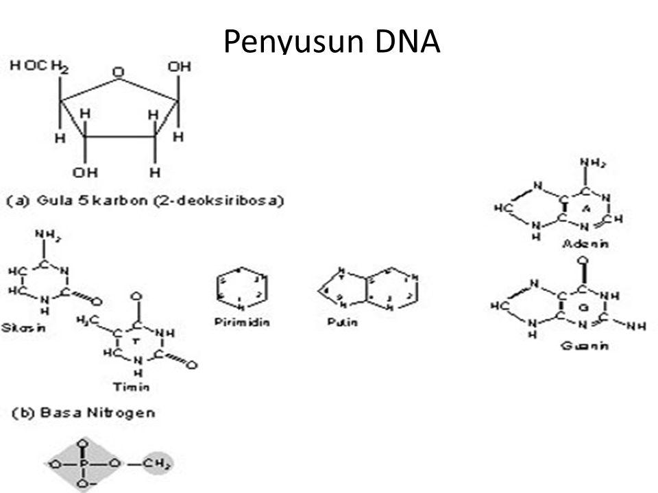 Penyusun DNA