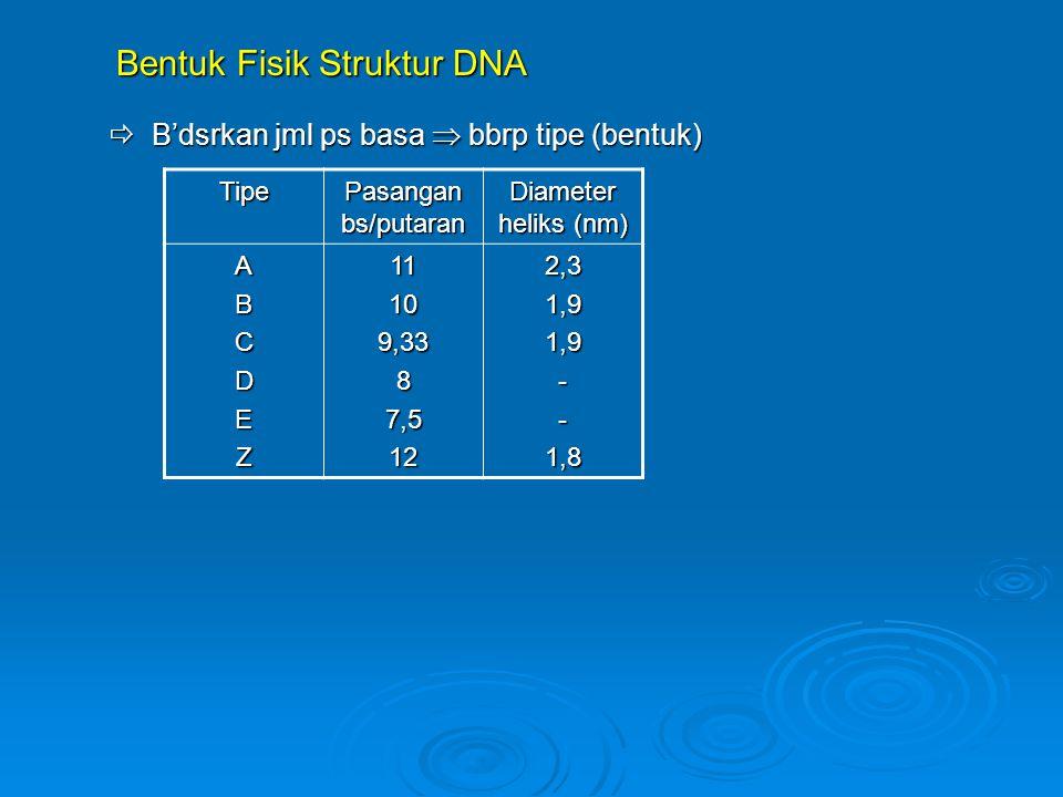 Bentuk Fisik Struktur DNA Bentuk Fisik Struktur DNA  B'dsrkan jml ps basa  bbrp tipe (bentuk) Tipe Pasangan bs/putaran Diameter heliks (nm) ABCDEZ11109,3387,5122,31,91,9--1,8