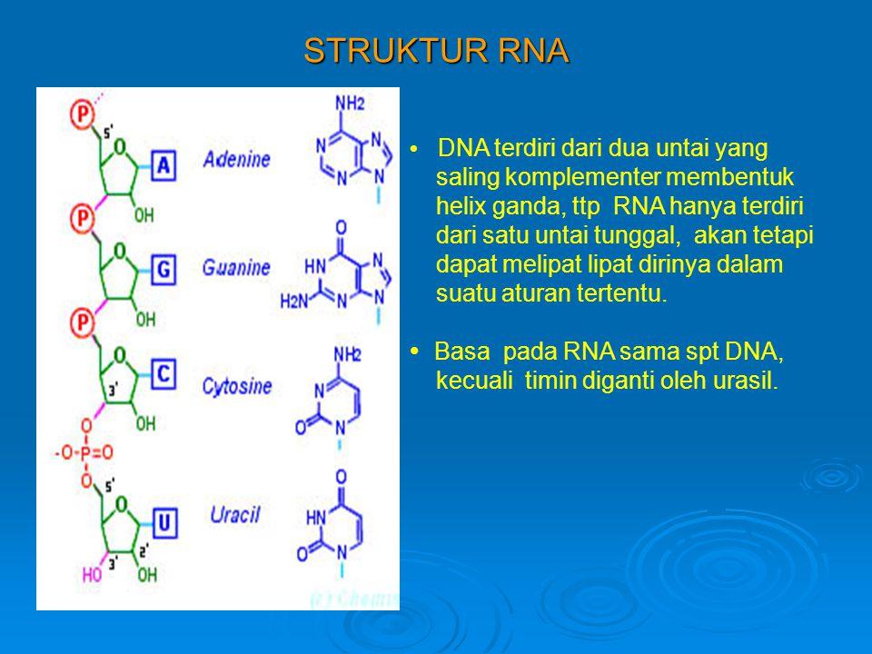 STRUKTUR RNA  DNA terdiri dari dua untai yang saling komplementer membentuk helix ganda, ttp RNA hanya terdiri dari satu untai tunggal, akan tetapi dapat melipat lipat dirinya dalam suatu aturan tertentu.