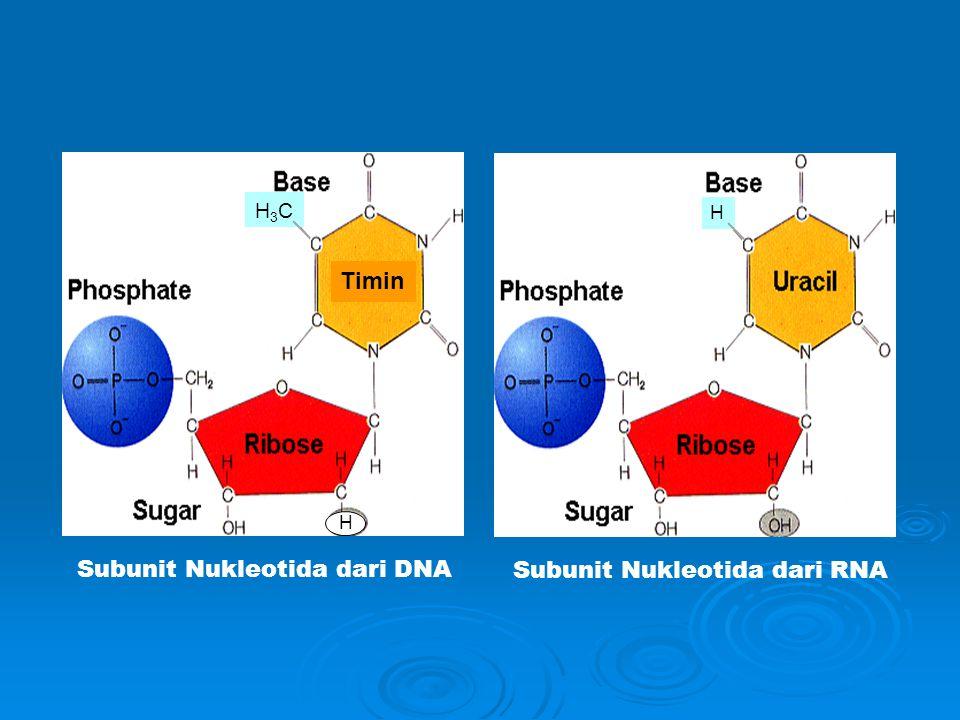 Subunit Nukleotida dari DNA Subunit Nukleotida dari RNA H Timin H3CH3C H
