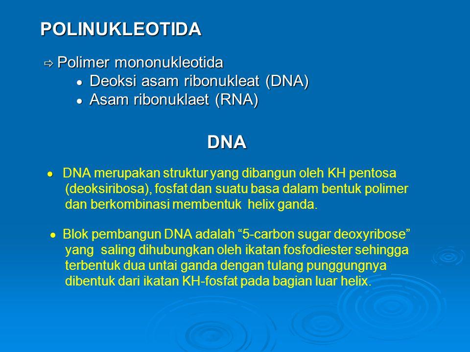 POLINUKLEOTIDA  Polimer mononukleotida  Polimer mononukleotida  Deoksi asam ribonukleat (DNA)  Deoksi asam ribonukleat (DNA)  Asam ribonuklaet (RNA)  Asam ribonuklaet (RNA) DNA DNA   DNA merupakan struktur yang dibangun oleh KH pentosa (deoksiribosa), fosfat dan suatu basa dalam bentuk polimer dan berkombinasi membentuk helix ganda.