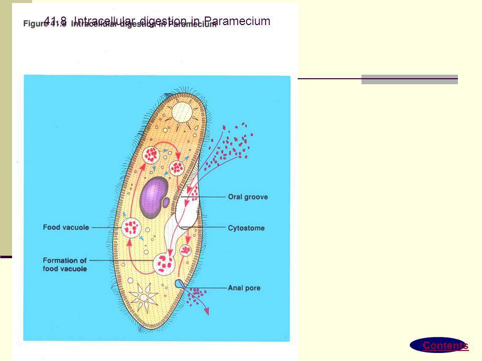 Gambaran umum Ingesti & digesti Pencernaan Ekstrasel vs Intrasel Urutkan jalan pencernaan pada mamalia Jenis adaptasi pencernaan Jenis gigi Jenis Salu