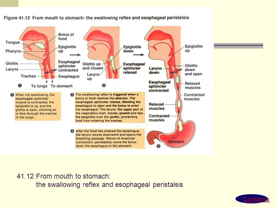 Contents 41.11 The human digestive system