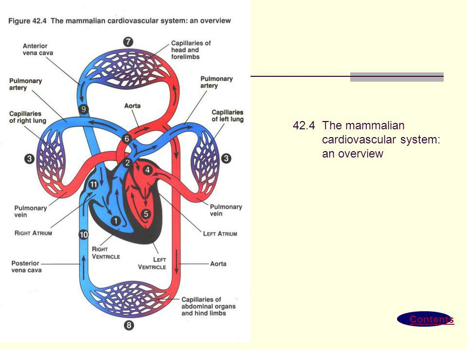 Contents 42.3 Generalized circulatory schemes of vertebrates