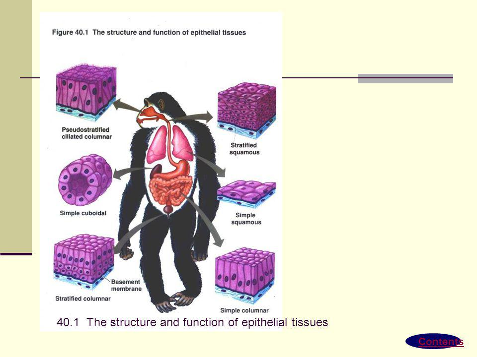 Contents 42.19 The structure and function of fish gills