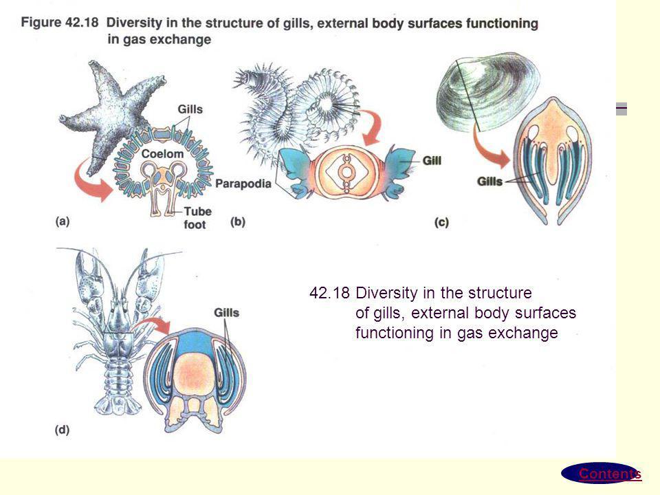 Sistem respirasi Hewan Sistem insang pada ikan Sistem trakea pada serangga Sistem paru-paru pada vertebrata Pertukaran Gas difusi O2 dan Co2 pada kapi