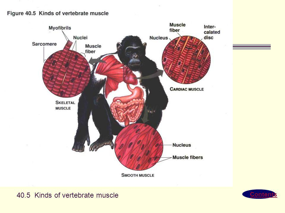 Contents 40.5 Kinds of vertebrate muscle