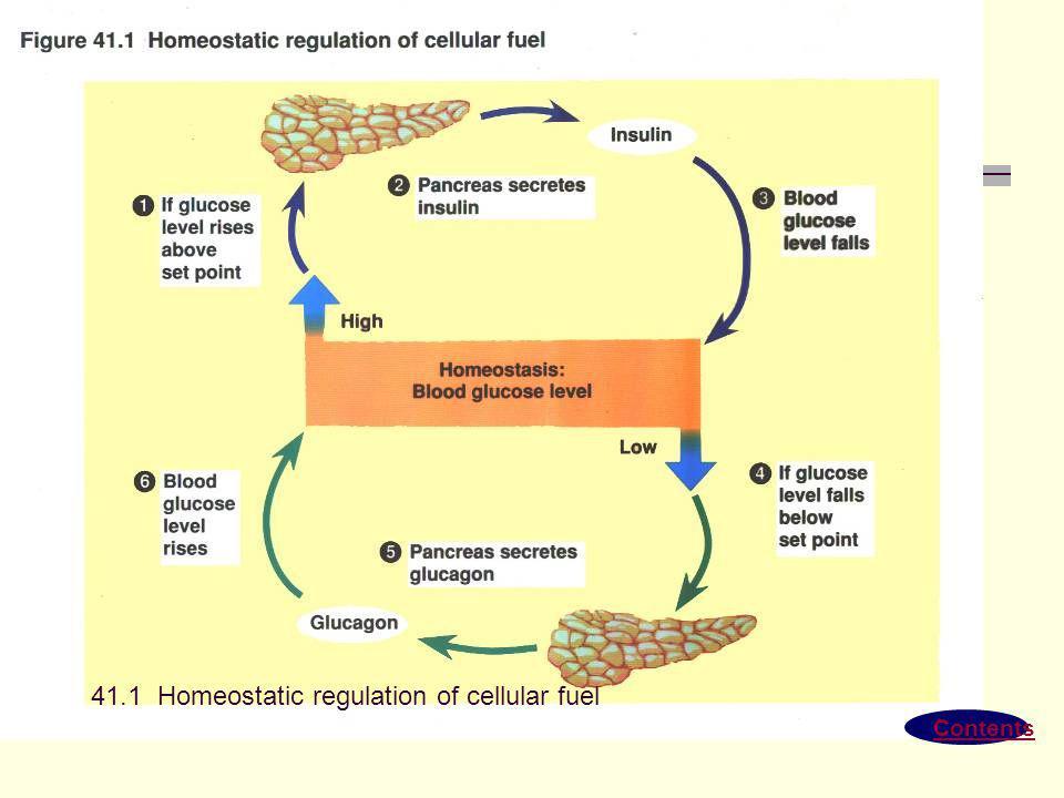 Contents 41.1 Homeostatic regulation of cellular fuel