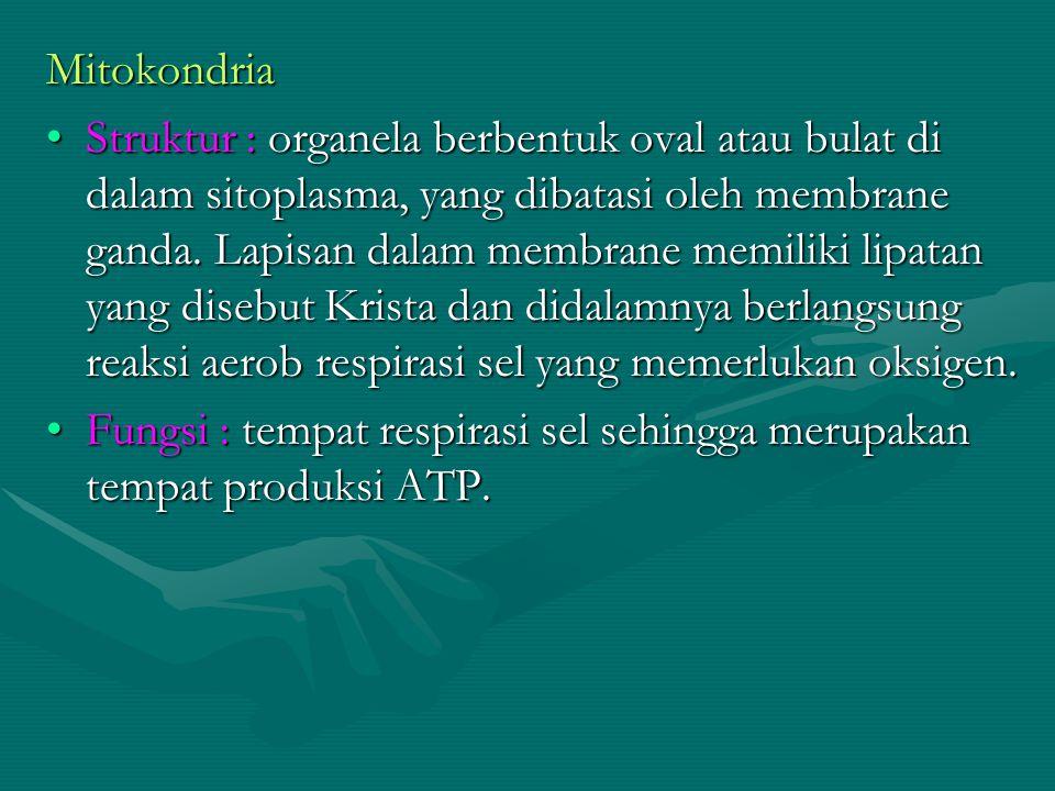 Mitokondria Struktur : organela berbentuk oval atau bulat di dalam sitoplasma, yang dibatasi oleh membrane ganda. Lapisan dalam membrane memiliki lipa